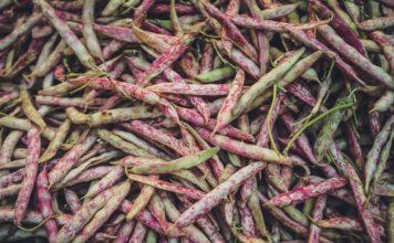 Le soja est l'une des légumineuses les plus consommées au monde.